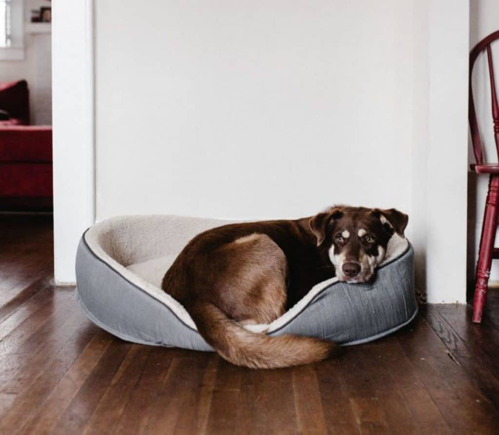 A puppy lying in the new dog bed to help improve his owner's quality of sleep.