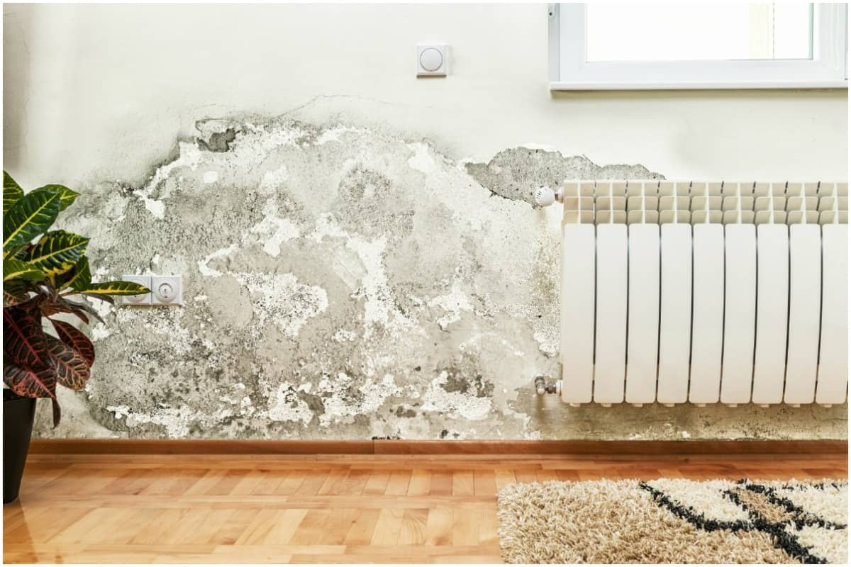 health hazard of mold in home